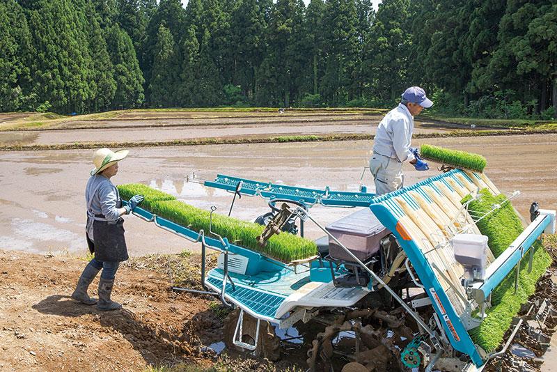 麹ともろみを知り尽くした   米づくりと発酵食生活