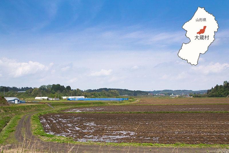 「日本で最も美しい村」で育つ   「最上鴨」という鴨